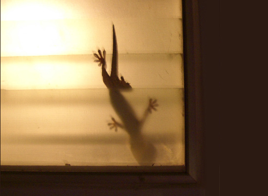 Why You Should Never Trust a Gecko – Fearful Adventurer
