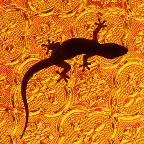 Why You Should Never Trust A Gecko Fearful Adventurer