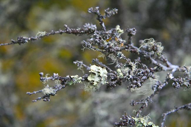 Tasmania_Moss