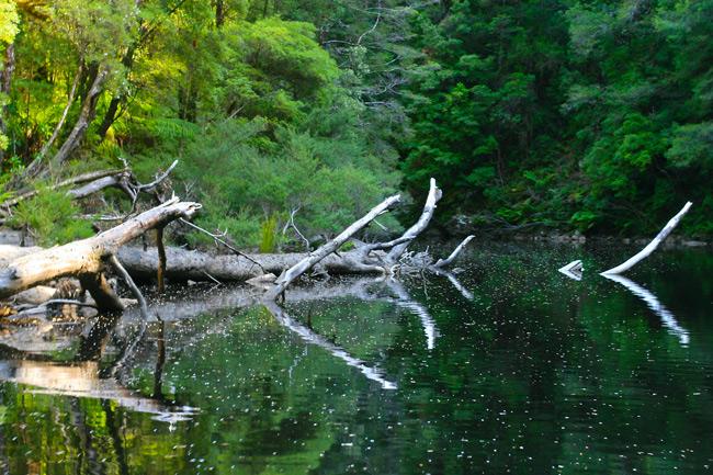Tasmanian_Wilderness2
