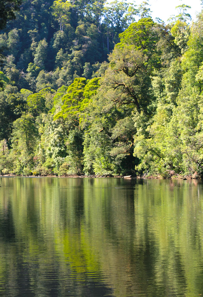 Tasmanian_Wilderness3