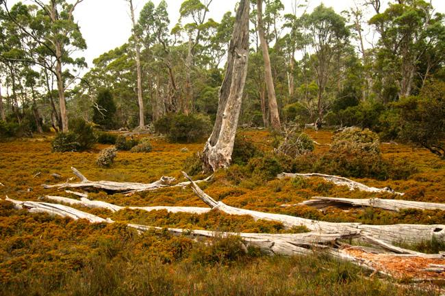 Tasmania_Wild_1