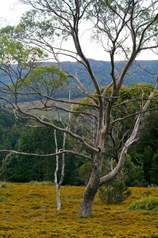 Tasmania_Wild_3